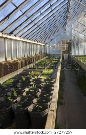 Morning light in a greenhouse - stock photo