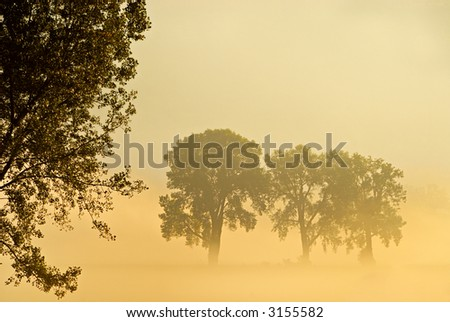 Morning mist in a field with trees, with the sunlight making a yellowish, surreal scene