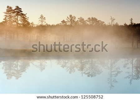 Morning mist in a marsh. Lake with forest reflection in foreground, trees in background. - stock photo