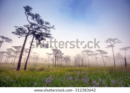 Morning mist Pine yard on Phu Soi Dao National Park, Thailand - stock photo