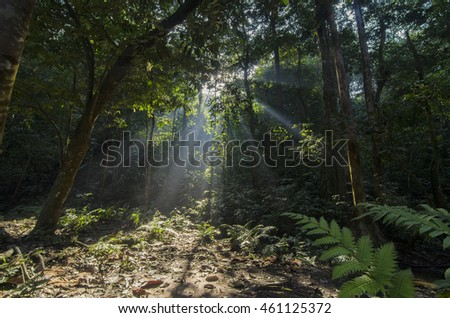 Morning Mist Rises Up From Rain Forest Floor With Sun Rays At Kanching Park  In Selangor