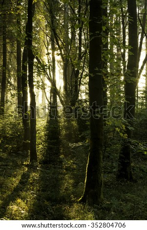 Morning Sun And Shadows In A Beautiful Autumn Forest.