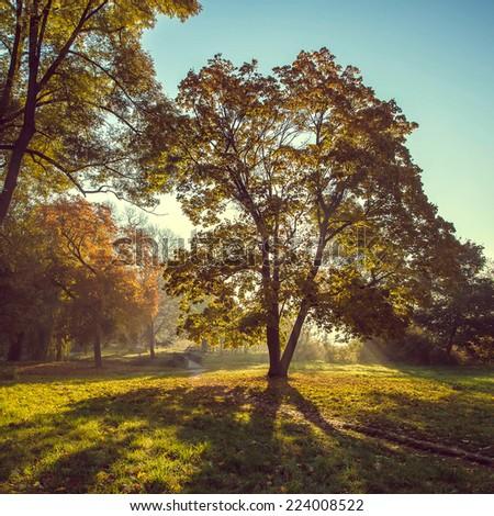 Morning sun beams in the autumn park - stock photo