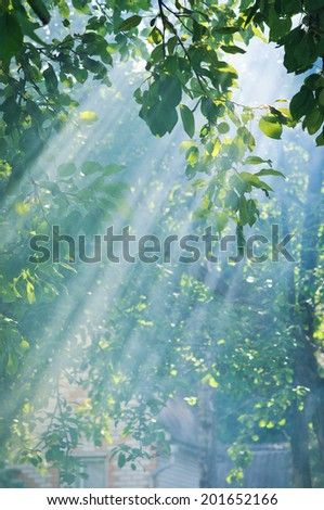 Morning sun dramatically casting intense rays through a large tree - stock photo