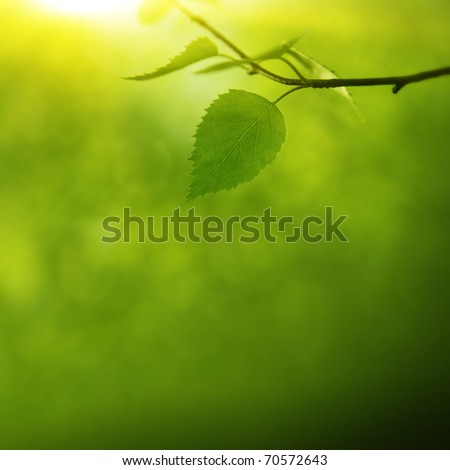 Morning sun in the forest. - stock photo
