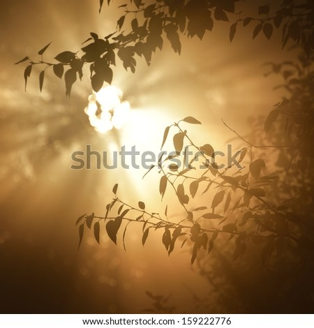 Morning sun in the tree foliage in strong fog - stock photo