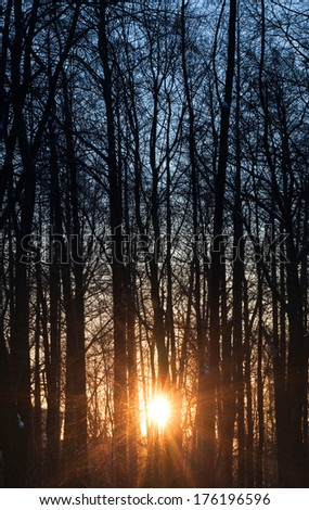 Morning Sun is shining through tall trees in the forest - stock photo