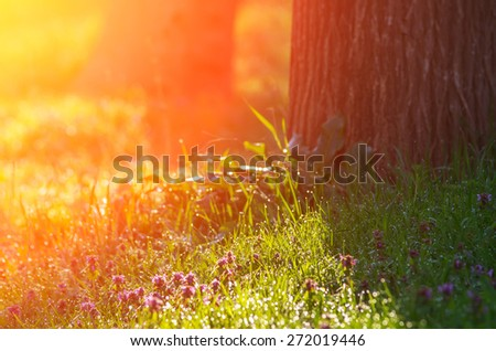 Morning sun rays fall on the green grass with dew in the light mist. natural composition - stock photo