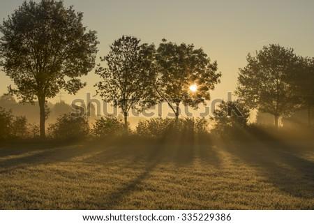 Morning sun shining through trees - stock photo