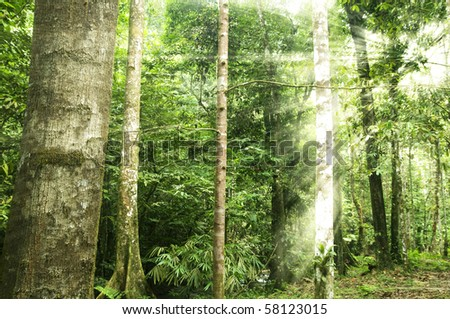 morning sunlight shining through tropical forest - stock photo