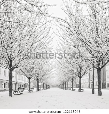 morning view on snow tree on Kampa island, Prague - stock photo