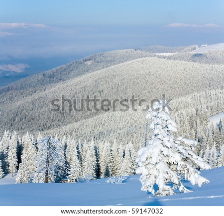 Morning winter calm mountain landscape with fir forest on slope (Carpathian Mountains, Ukraine).  Two shots stitch image. - stock photo