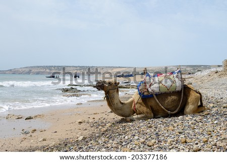 Morocco camel on beach in bright sunshine and fishermen  - stock photo