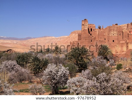 Morocco Ouarzazate - Remains of medieval Kasbah built in adobe, surrounded by almond trees in blossom - near Ait Ben Haddou. - stock photo