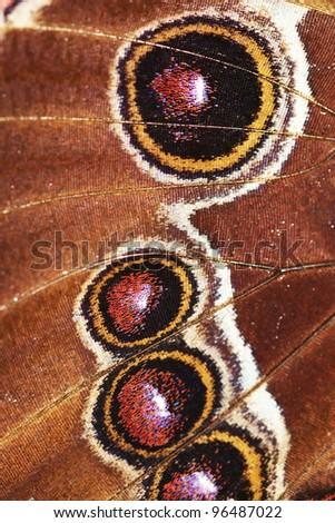 Morpho peleides - Blue Morpho Butterfly - Detail of butterfly wings - stock photo
