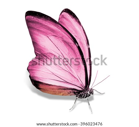 Morpho pink butterfly , isolated on white - stock photo
