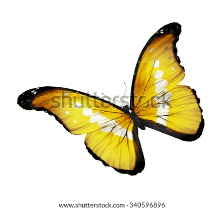 Morpho yellow butterfly , isolated on white background - stock photo