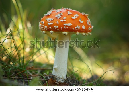 Mortally poisonous fungus, close up
