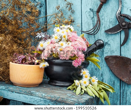 mortar with healing herbs and garden equipment outdoors - stock photo