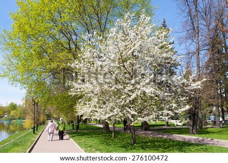 MOSCOW - MAY 07: Blooming apple tree in Catherine Park on May 7, 2015 in Moscow. Catherine Park is located in Moscow's Meshchansky District. - stock photo