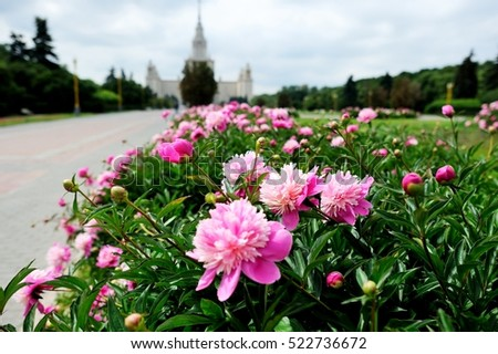 Moscow State University in pink peony flowers with focus on flowers