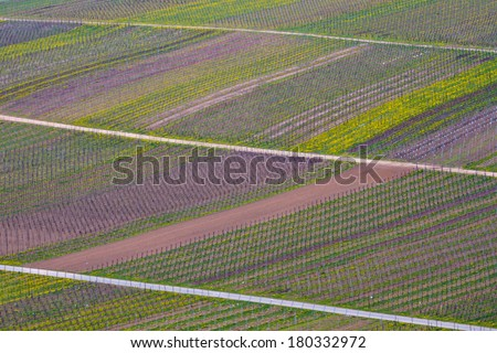Mosel valley vineyard background  - stock photo