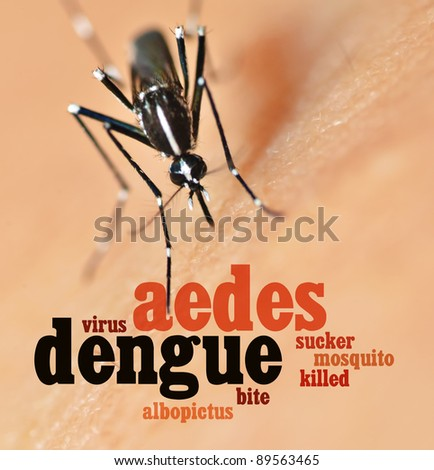 Mosquito bite on human skin and text - stock photo
