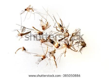 mosquito dead - stock photo