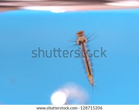 Mosquito larva - stock photo