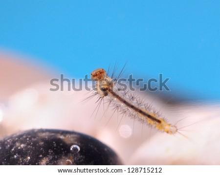 Mosquito larva under water. - stock photo