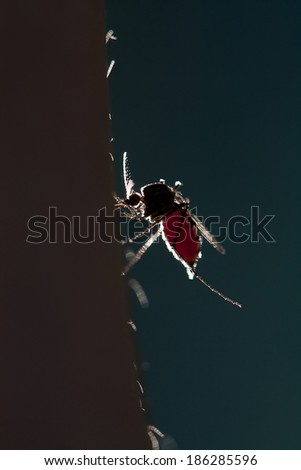 mosquito on a human skin - stock photo