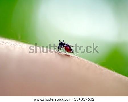 Mosquito sucking human blood on extreme macro - stock photo