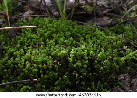 Moss - fluffy green herb on a large stone. The magic of the forest. Nature