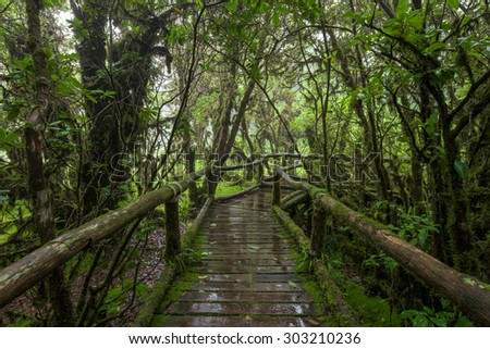 Moss forest, passage in the primeval forest in Doi inthanon Chiang Mai, Thailand. - stock photo