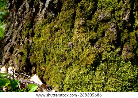 Moss forest tree  - stock photo
