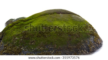 Moss grow on sea rock on white background. - stock photo