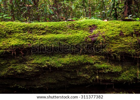 Moss growing in big fallen tree - stock photo