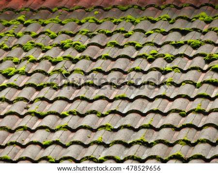 Moss Growing On The Roof Tile