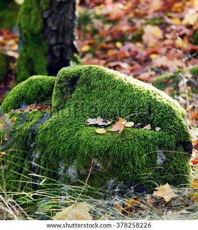 Moss in forest - stock photo