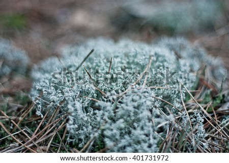 Moss in the forest. Shallow depth of field. Bokeh - stock photo