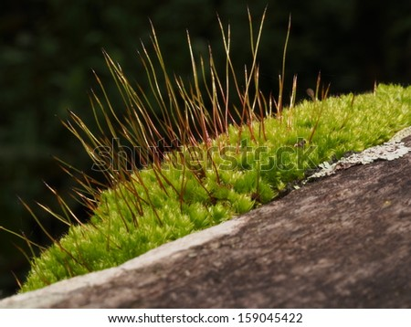 Moss in the Jungle - stock photo