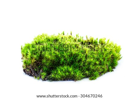 moss isolated on white - stock photo