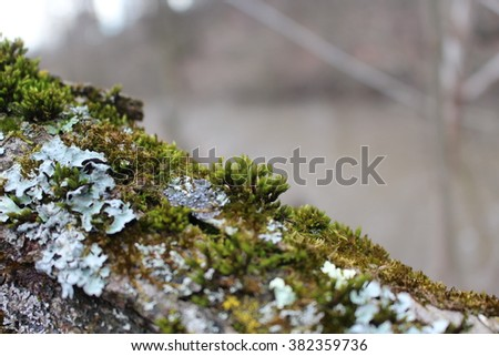Moss, Leaf on Moss, Moss autumn, forest moss, moss seeds, Nature, Wildlife, Micro. - stock photo