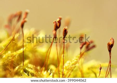 Moss macro (selective focus ) - stock photo