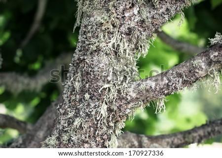 Moss on a tree, closeup - stock photo