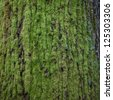 moss on bark of tree - stock photo