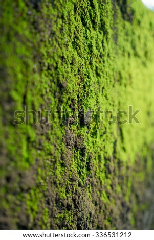 moss on cement wall