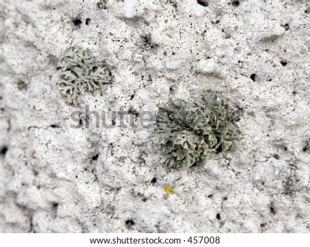 Moss on cement wall #1 - stock photo