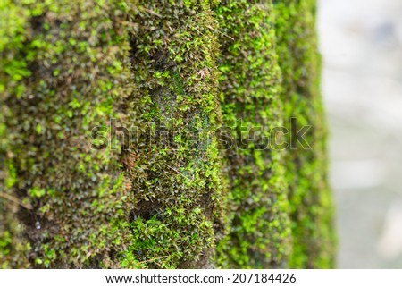Moss or lichen on cement column. - stock photo