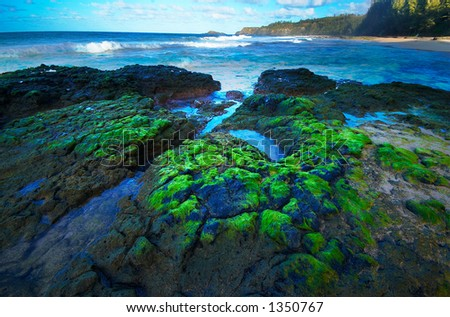 Moss, ponds & waves on Kauai Hawaii. More with keyword Series001I. - stock photo